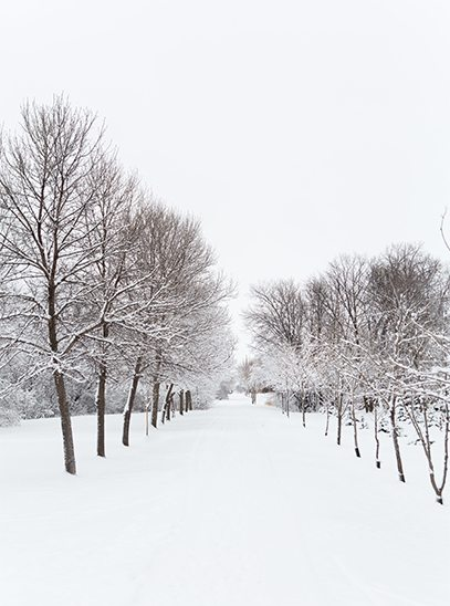 Path and trees covered in snow in rural Carman, MB where Royal LePage Carman is Located