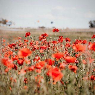 We will remember them #lestweforget #rememberanceday